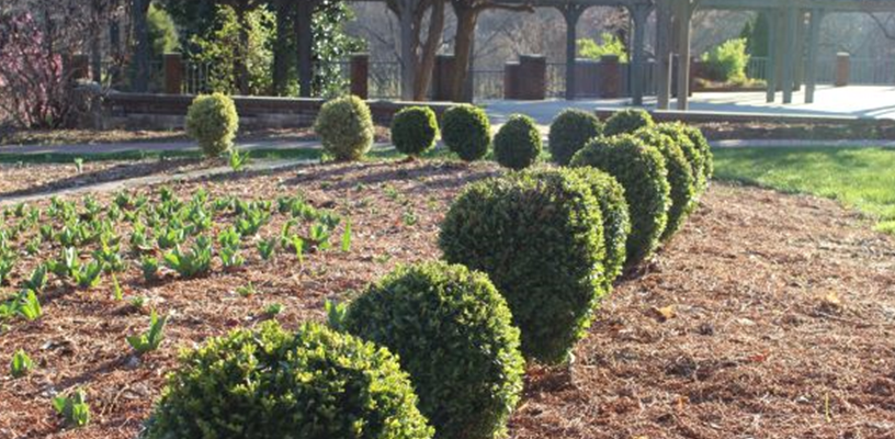 Are Your Boxwood Plants Sick?